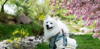 Jak odchudzić psa?